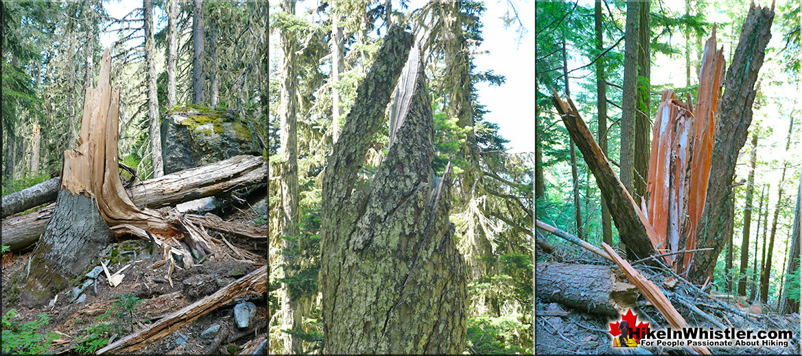 Windsnap Deadfall in Whistler