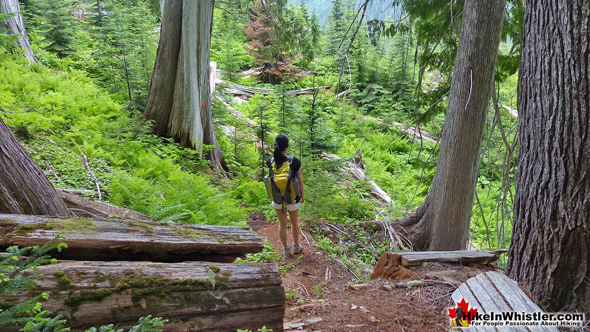 Meager Hot Springs Trail Hike in Whistler 1