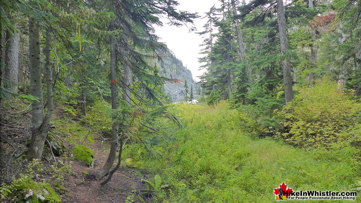 Fall Camping in Whistler: Newt Lake Trail